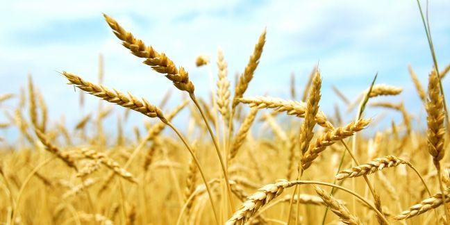 La Daf et la Direction achats à égalité : l'exemple de Grimaud sur le contrôle des prix des céréales