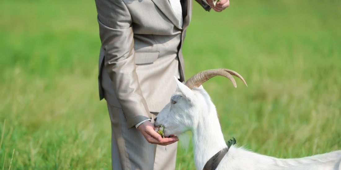 16 mai 2016: Charles-François dit 'au revoir' à ses chèvres.
